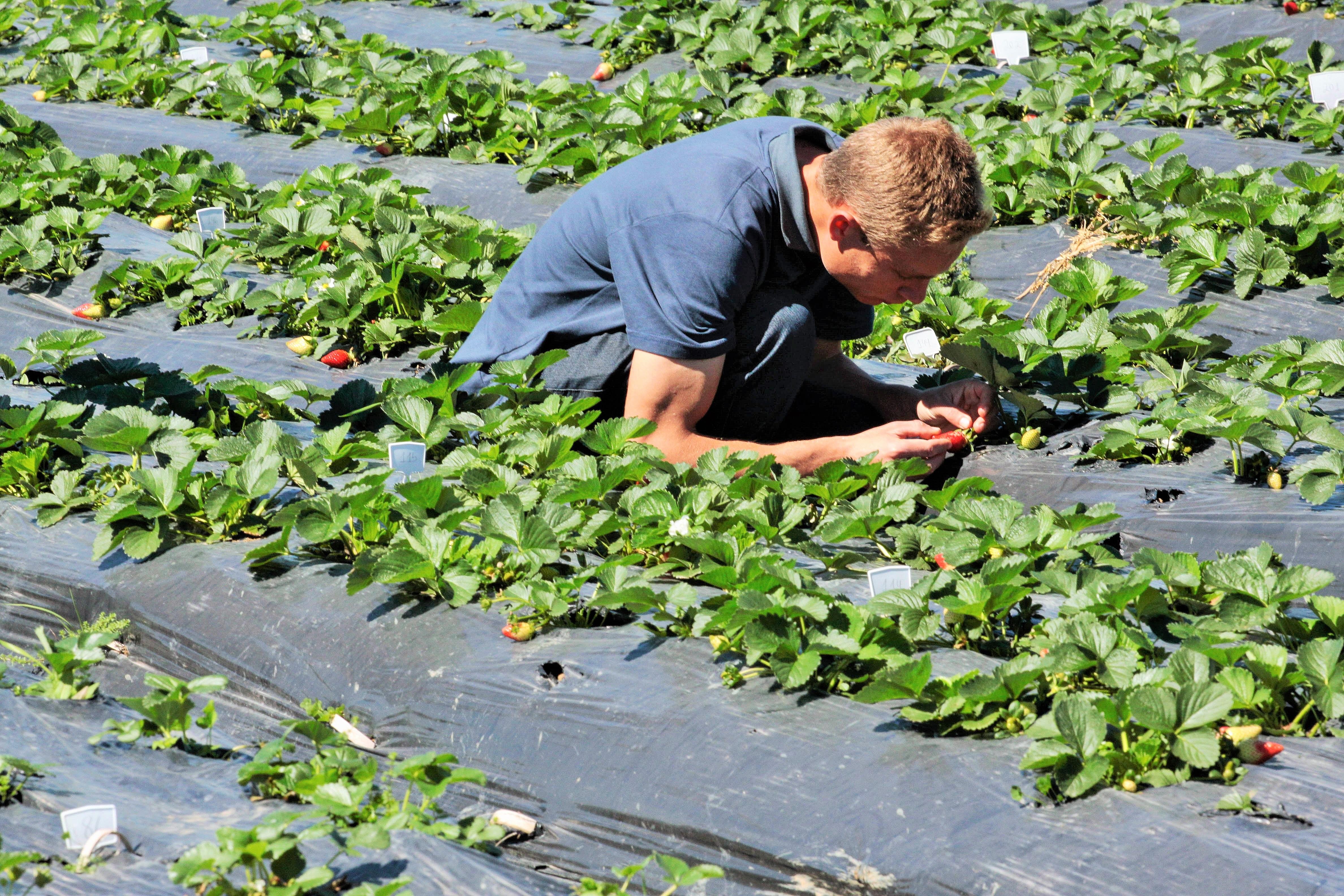 Programa é voltado para graduados nas áreas de Ciências Agrárias ou Biológicas - Foto: Jonas Pôrto